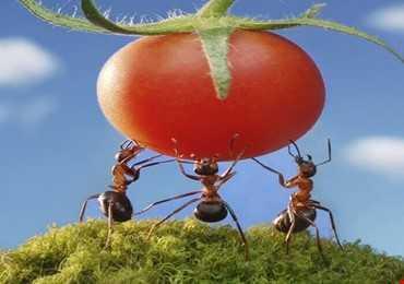 Làm Thế Nào Mà Loài Kiến Có Thể Nâng Các Vật Nặng Gấp 50 Lần Trọng Lượng Cơ Thể Của Nó?
